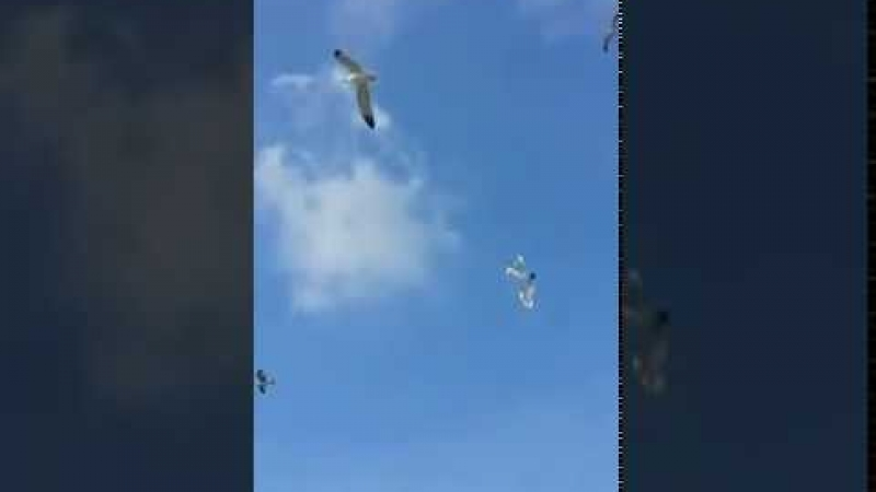 Video di Ramona Aloia