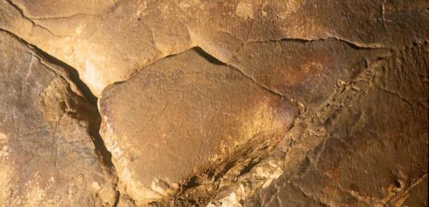 www.grottadelgenovese.it